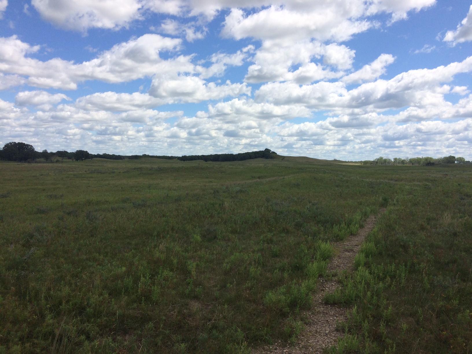 Grasslands #1.JPG